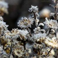 Зимние цветы. :: Svetlana Baglai