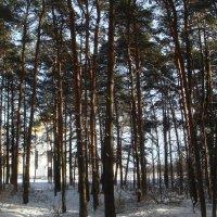 в лесной тишине... :: helga 2015