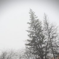 Ели :: Роман Атемов