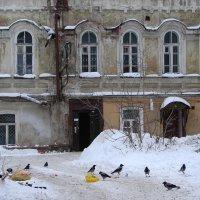 Потрошители помоек :: Валерий Чепкасов