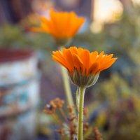 цветок :: Татьяна Толмачева