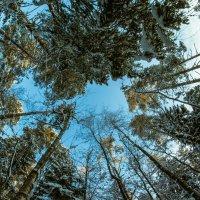 Когда деревья были большими :: Viacheslav Kruglik