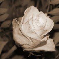 Роза моей прабабушки.... :: Tatiana Markova