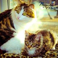 Новый Вискас со вкусом черники. И пусть ваша кошка офигеет от удивления! :: Наталья Александрова