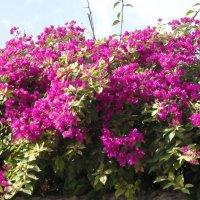 Гефсиманский сад :: Надежда