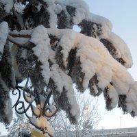 В лучах зимнего солнца :: Наталья Пендюк Пендюк