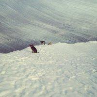 Зима.Снег. Одинокие друзья :: Сергей Алексеев