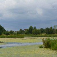 Заболоченный участок реки :: Ирина Бархатова