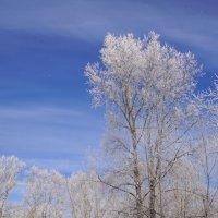 Зимнее небо :: Наталия Григорьева