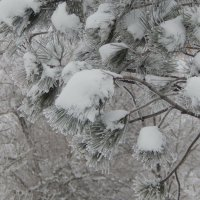 Картина снегом.) :: Ольга Шерстобитова
