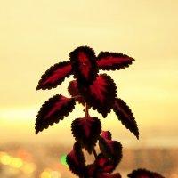 Цветок на подоконнике :: Сергей Алексеев