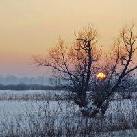 Старое дерево :: Виктор Четошников