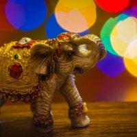 индийский слон :: Оксана Сладкевич