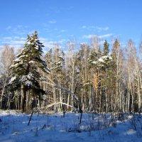 После больших снегопадов. :: Мила Бовкун