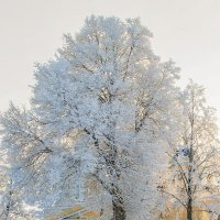 Зимний день :: Nadia Brusnikova