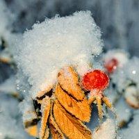 осень с зимой :: Владимир Кочнев