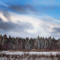 зимний лес :: Nadia Brusnikova