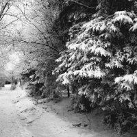 Зимний парк :: Мария Кондрашова