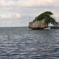 Жизнь в океане :: Антонина