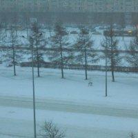Снегопад в Петербурге :: ДС 13 Митя