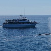 Один из 15-ти китов, которых мы видели в Атлантике.... :: Юрий Поляков