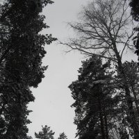 Зимнее небо :: Анатолий