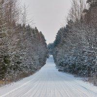 Морозный зимний день :: Андрей Куприянов