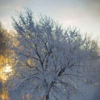 зимняя сказка 01 :: Denis Zakalyapin