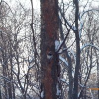 Дятлы в Автозаводском парке. :: шубнякова