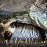 Как хочется спать :: Galya Chikunova