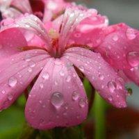 После дождя :: Юлия Жогина