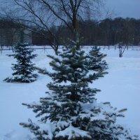 Канун Старого (проверенного) Нового года :: Андрей Лукьянов