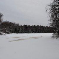 Зима пришла. :: Виктор ЖИГУЛИН.