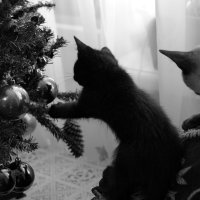 Оставьте елку до весны, коты будут при деле. :: Ирина Крохмаль