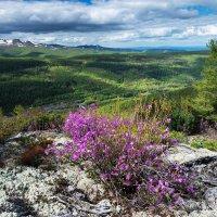 На склонах горы Холдоми. :: Поток
