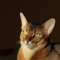 Котя! :: Наташа Шамаева