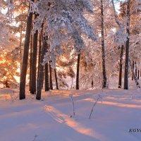Зима! В твоем плену не только лес и поле, и я ослеплена застывшею красой. :: Галина