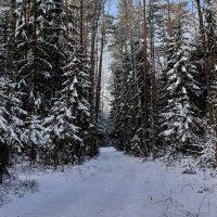 В  зимнем  лесу. :: Валера39 Василевский.
