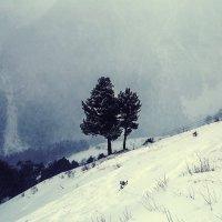 Два деревца :: Zifa Dimitrieva