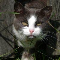 Охотничий лаз в заборе :: Валерий Чепкасов