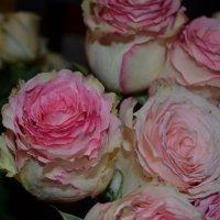 Букет из роз :: Людмила