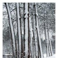 первый снег1 :: Вера Ульянова