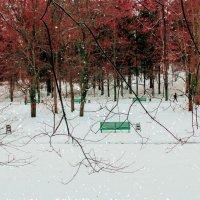Парк в снегу. :: Ольга Назаренко