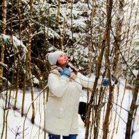 В еловом лесу :: Ольга Чирятникова