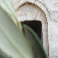 Веточка Оливы :: Надежда