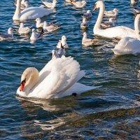 Белая птица на синем... :: Елена Васильева