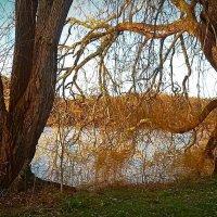 Соседи на берегу озера :: Nina Yudicheva