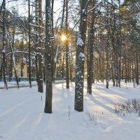 Зимний,солнечный денёк. :: Виктор Евстратов