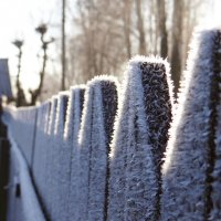 Мороз :: Diana Razgulova