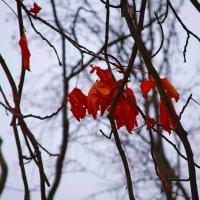 Осень. :: mishel astoria